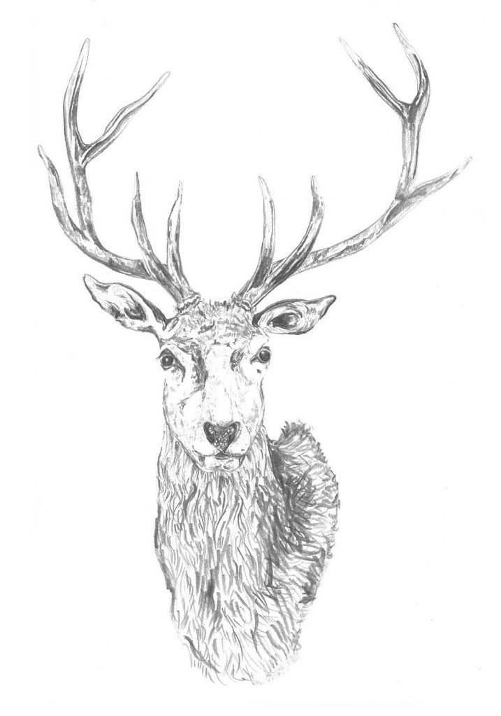 Deer card_edited-1